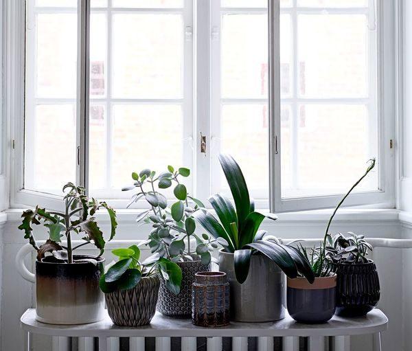 décorer plantes